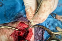 vetclinic-operation2